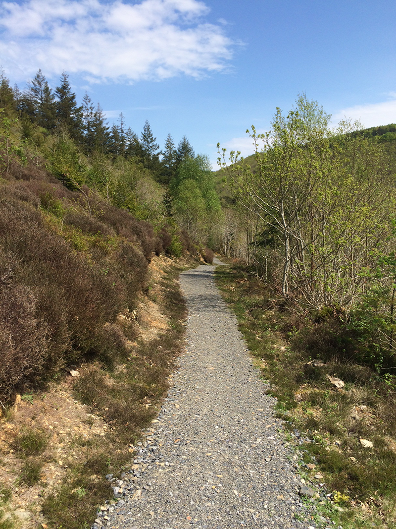 Brechfa Forest Trails